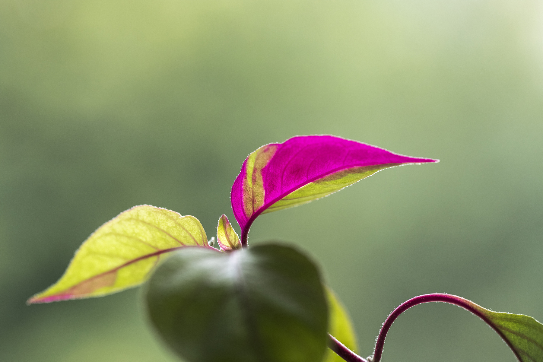 Individus végétaux